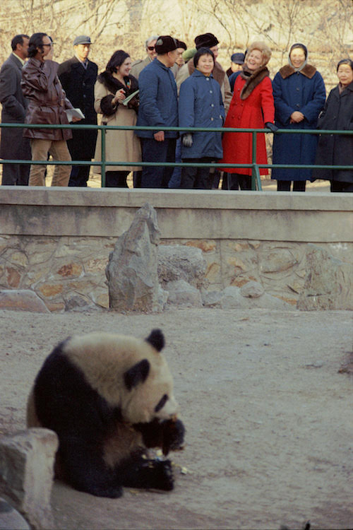 Mrs. Nixon and her official party watch the giant pandas at the Peking Zoo