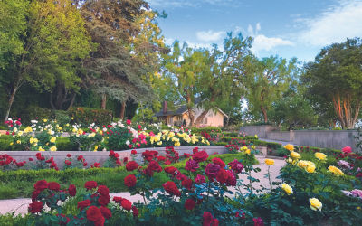 The Orange County Rose Society presents their 2021 Rose Show